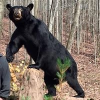 South Algonquin guide service