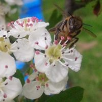 """Биологичен пчелен мед Organic honey/Organic apiary""""Diado Dimovia pchelin"""""""