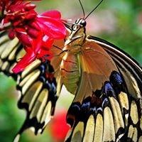 Metamorphosis Butterfly Farm