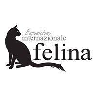 ExpoInternazionale Felina