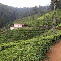 High hill tea
