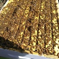 Illinois State Beekeepers Guild