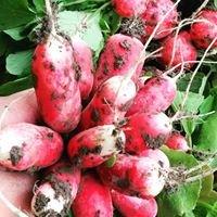 Hedgeview Farm Organics