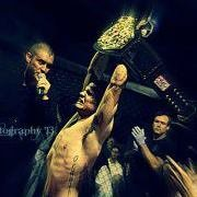 Gator MMA