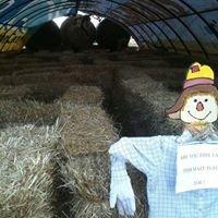 Gunter Farms Pumpkin Patch