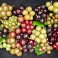 Carr's Vineyard