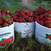 Strawberry Knob Farms