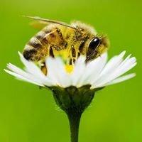 Two Beekeepers