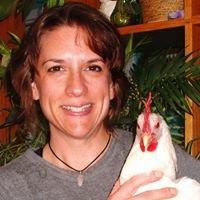 Chickenmama's Farm-Fresh Eggs