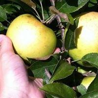 Appleberry Farm