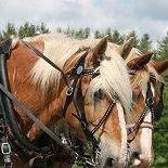 Pleasant Valley Horse-Drawn Wagon and Sleigh Rides LLC.