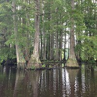 Great Cypress Swamp