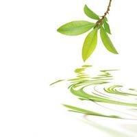 HomeopathyWizard