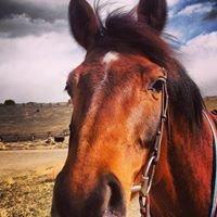Gallatin River Ranch Equestrian Center