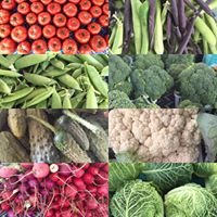Chippewa Valley Produce LLC