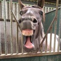 Upperwood Farm Equestrian