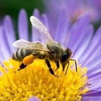 Clark County Beekeepers Association / CCBA