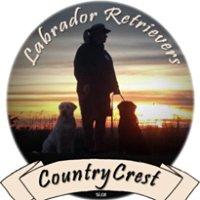 CountryCrest Labrador Retrievers
