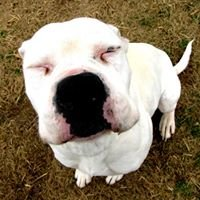 Meriwether County Animal Shelter