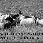 Navajo Sheep Project