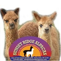 Sunset Ridge Alpacas