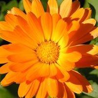 Mari's Gold Aromatherapy