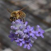 Hive & Honey Apiary