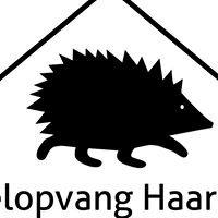Egelopvang Haarlem