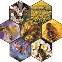 Azərbaycan Arıçılıq Mərkəzi/  Azerbaijan Beekeeping Center