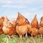 C&W Farm Fresh Eggs