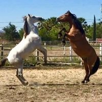 Kickin Back Ranch - Horse Boarding Brentwood / Knightsen California