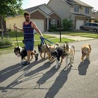 Singleton Dog Training