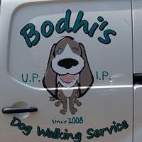 Bodhi's dog walking service