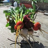 Gypsythyme Garden Coaching