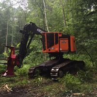 Anderson Timber Harvesting