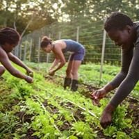 Young Entrepreneurs and Agricultural Program