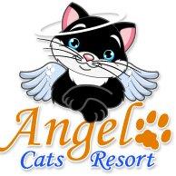 Angel Cats Resort