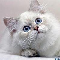 Just Cats Clonmel