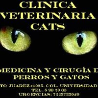 Veterinaria CATS