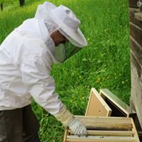 Honig-Bienen