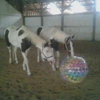 Leaning Birch Equestrian Center