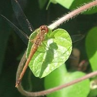 Dragonfly Botanicals Wisdom Center