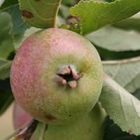 The Standen Fruit Farm Orchard