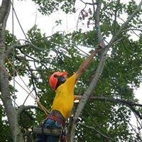 PS Tree Service