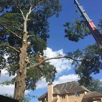 Elite Tree Emergency Management