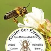 Imkerei zum Bienenkorb