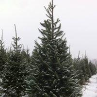 Deer Run Tree Farm
