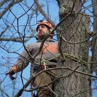 Baumann Tree Service