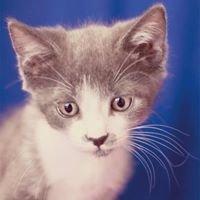 Feline Ltd. Cat Clinic