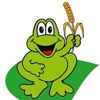 Ranocchio verde srl